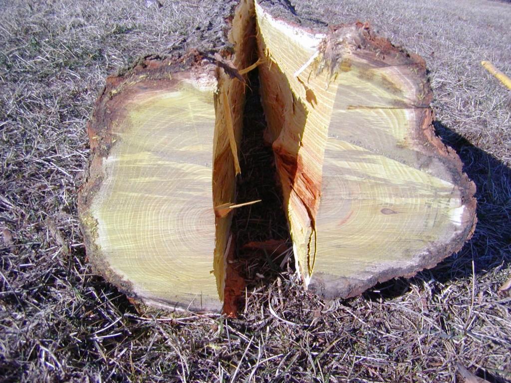 base of the log
